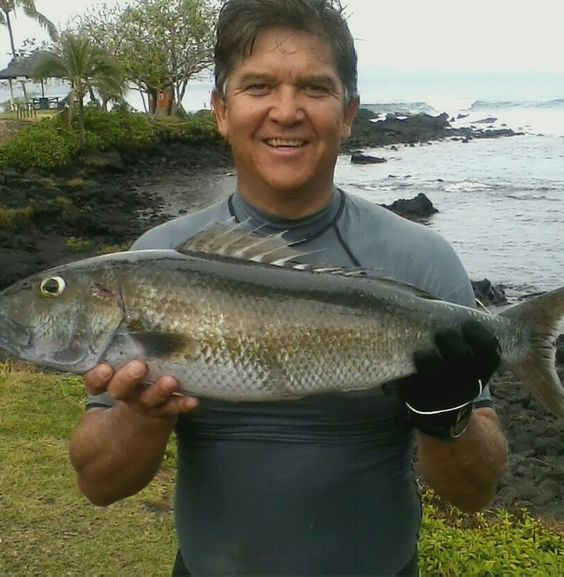 Uku hilo hawaii or grey snapper hawaii fishing for Hilo fish company