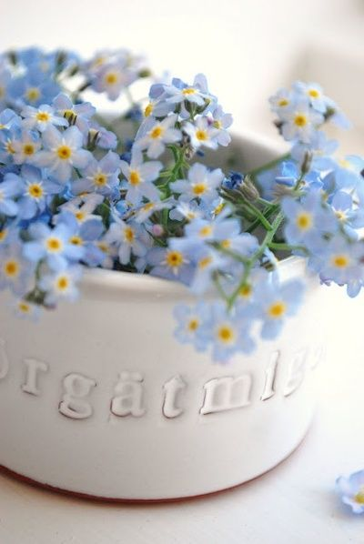 ...forget-me-not