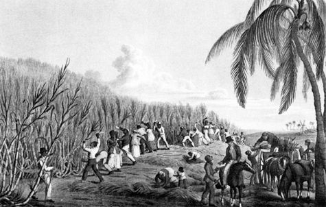 sugar revolution in the caribbean Emancipation in the french caribbean and cuba 7  8pirates, buccaners and privateers in the caribbean 9 a the sugar revolution  form four history.