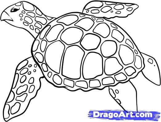 Line Drawings Of Ocean Animals : How to draw a sea turtle step by animals