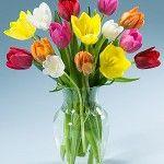 Tulips   love them!