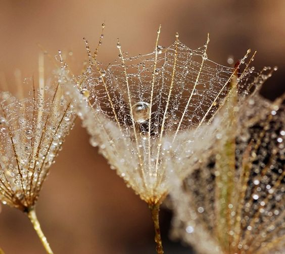 Early morning dew jewels Micro And Macro Photography By Andrew Osokin_30