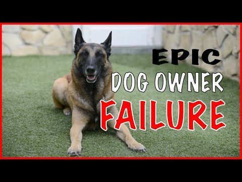 Dog Owner Failure With A Malinois Working Dogs Should Not Be Owned By Everyone Youtube With Images Working Dogs Dog Owners Malinois