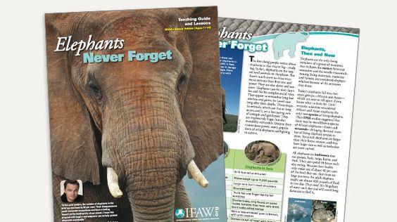 Animal Studies - 6th-8th  Download pdf