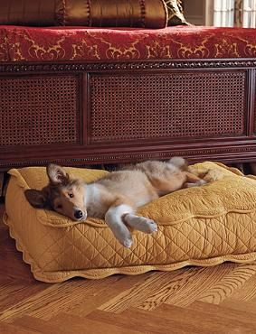 Elegantly provide your pet with a plush place to relax without sacrificing your home's style with the Brocade Pet Bed.