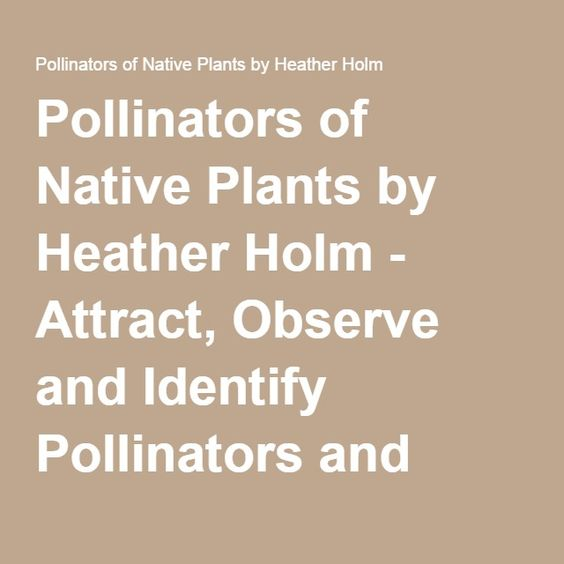 Pollinators of Native Plants by Heather Holm - Attract, Observe and Identify Pollinators and Beneficial Insects with Native Plants