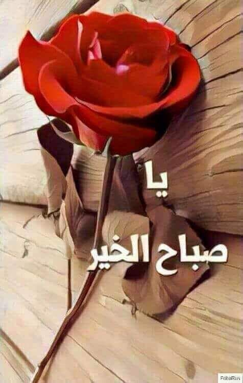 Pin By Manal On صباح الخير Good Morning Roses Good Morning Arabic Morning Pictures
