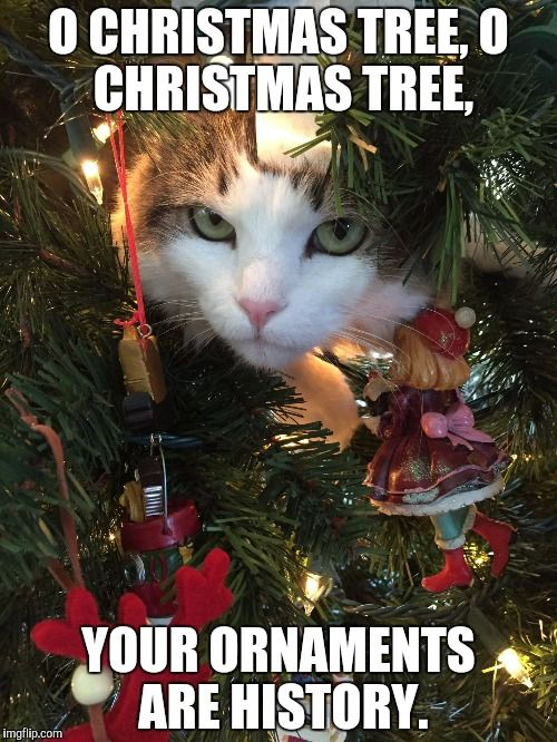 O Christmas Tree O Christmas Tree Your Ornaments Are History Cat Plotting In 2020 Cat Christmas Tree Christmas Cats Christmas Tree Gif