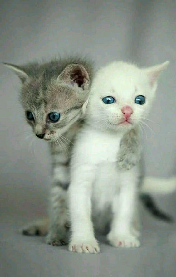 Brothers Fosterkittens Fosteringsaveslives Kitten Kittenpictures Cutekittens Baby Katzen Niedliche Katzchen Tiere