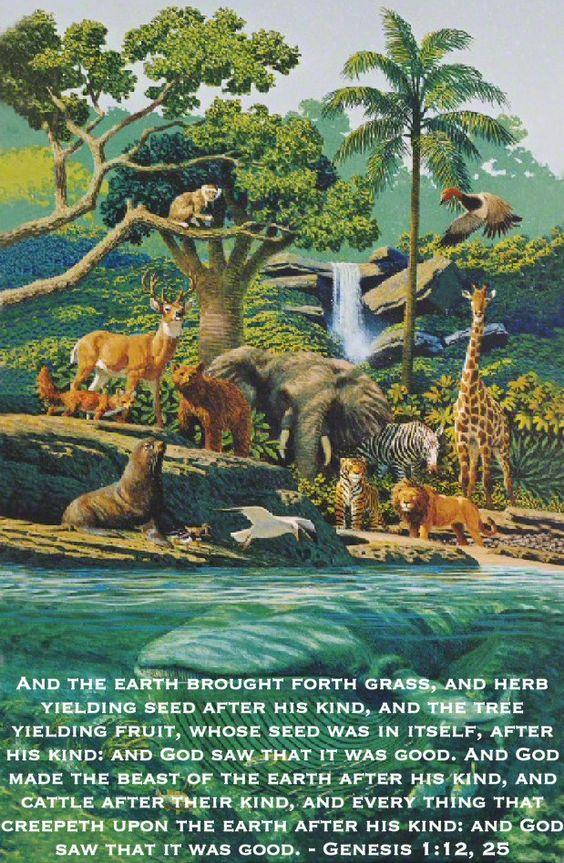 Nature a precious gift of god essay