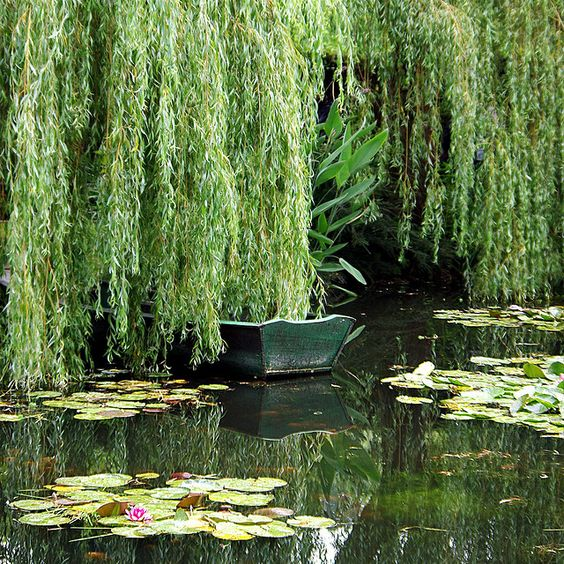 Oh what i would give to have a pond and weeping willow for Plants near ponds