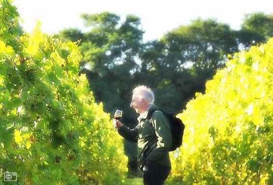 Nederlandse Wijnfeesten in Groesbeek voor levensgenieters