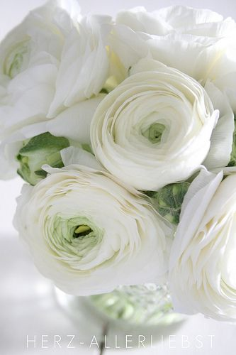 Pure white ranunculus flowers arranged in a clear vase. #bouquet