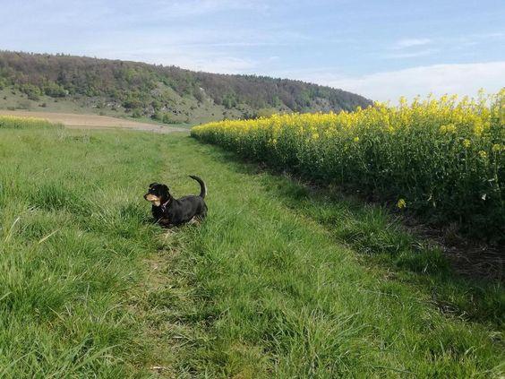 Marie Sucht Ganz Dringend Ein Neues Zuhause In Bayern Rennertshofen Neues Zuhause Neue Wege Sucht