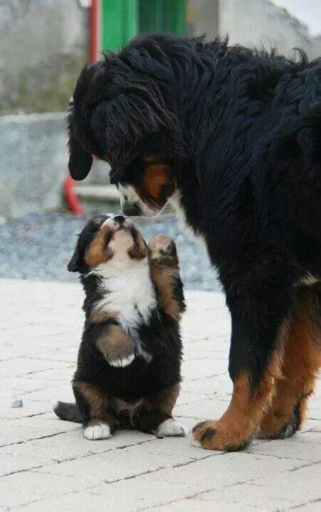 Pupppy!!! ❤️