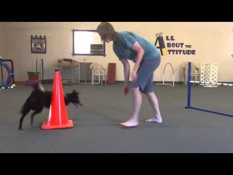 ▶ Teaching Left And Right To Your Agility Dog (interesting new way of teaching it)