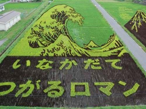 Japonya'daki inanılmaz pirinç tarlaları | GAZETE VATAN GALERİ