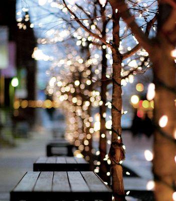 Mini lights make for a beautiful boulevard.