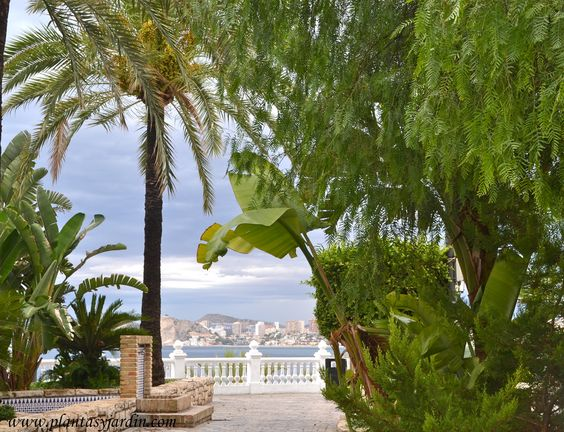 Jardines junto al mar, plantas para 1º línea del mar: Mussa, Schinus & Phoenix.