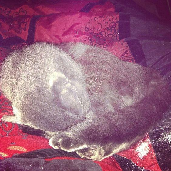 Lily cuddling