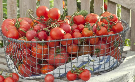 Tomaten Haltbar Machen Die Besten Methoden Tomaten Haltbar Machen Getrocknete Tomaten Selber Machen Tomaten