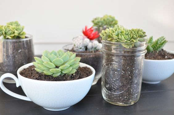 Cacti and succulents are wonderful plants because they require such little maintenance.