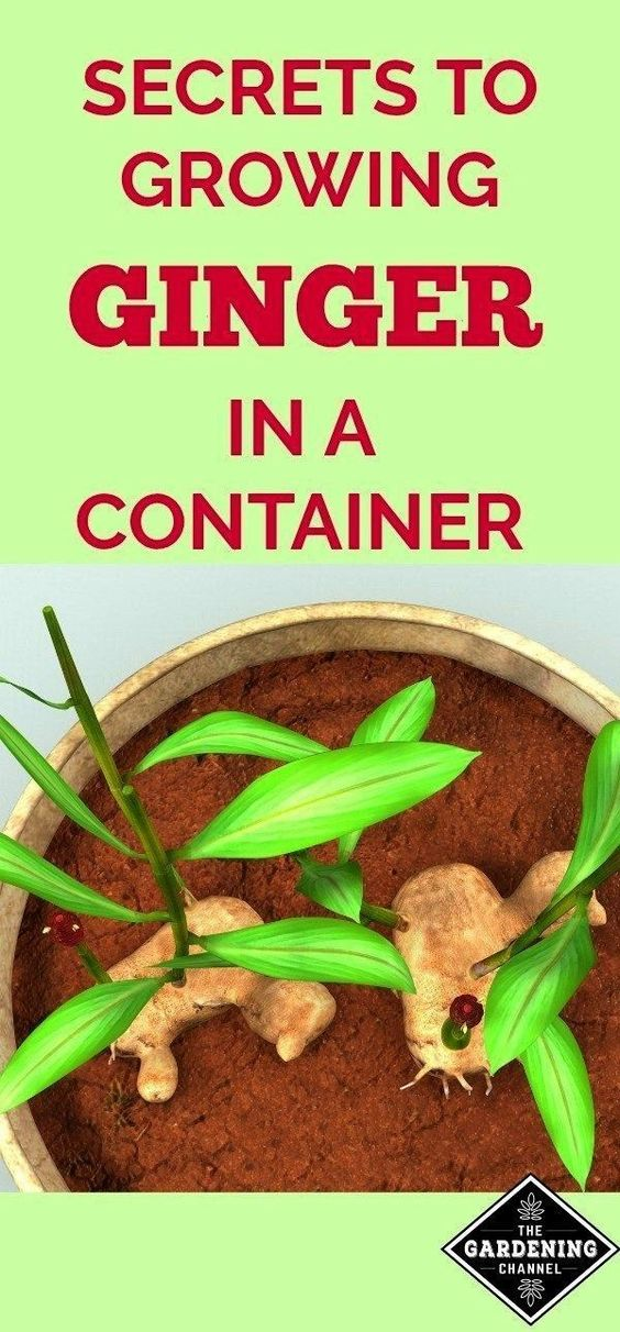 3ds Caution Channel Container Container Gardening Australia