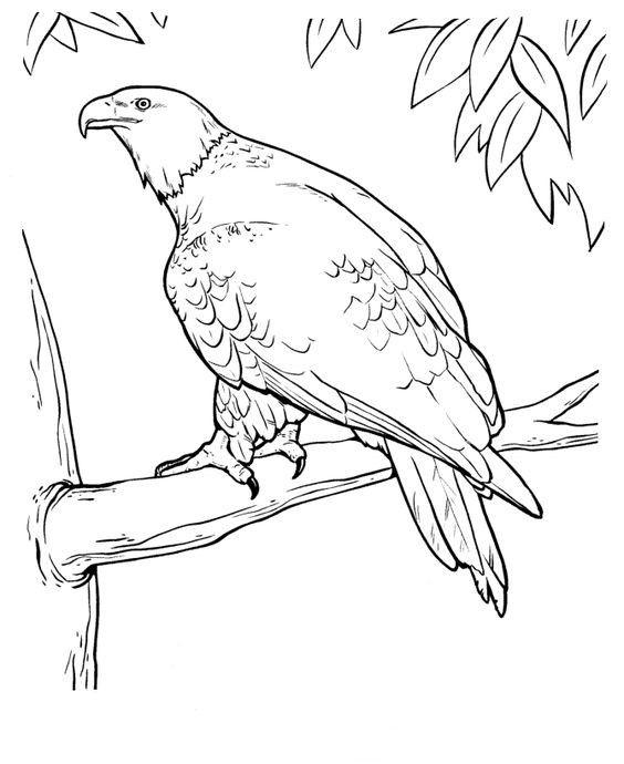 https://www.fws.gov/southeast/pdf/workbook/national-wildlife-refuge-system-coloring-book.pdf | 690x564