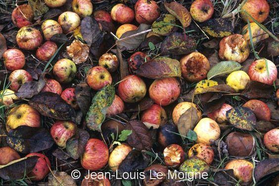 Jean-Louis Le Moigne