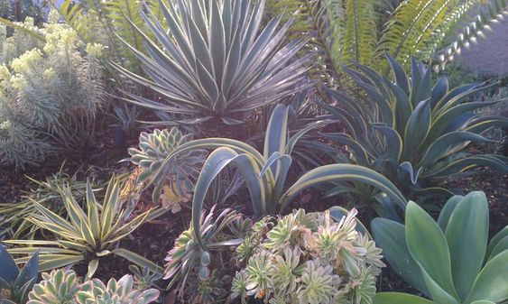 Native And Or Drought Tolerant California