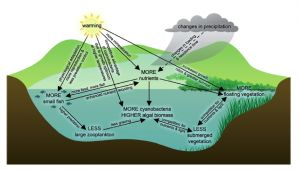 climate change effects on aquatic carbon cycle