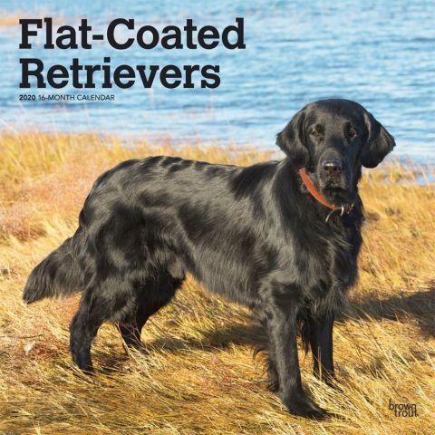 Flat Coated Retrievers 2020 Calendar The Flat Coated Retriever Is