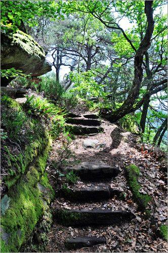 Pirmin Nohr - Waldtreppe