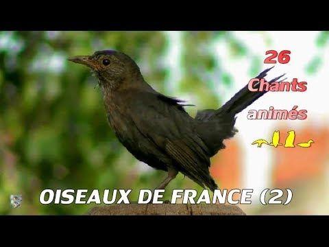 15++ Chants d oiseaux de jardin inspirations