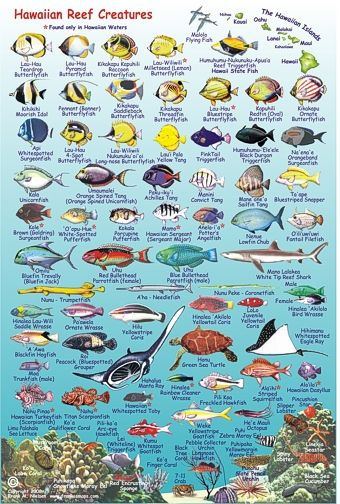 image gallery maui fish