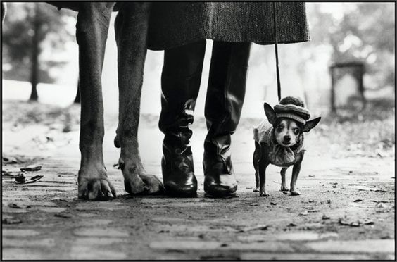 This Amazing Shot Looks So French Even The Dog Looks French