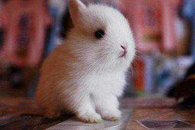 작고 귀여운 아기토끼 사진들 : 네이트판
