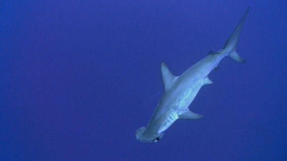 http://www.dive-lounge.de/html/agypten_brother_islands.html