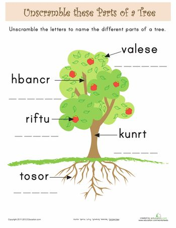 worksheets parts of a tree for kids science pinterest trees activities and the o 39 jays. Black Bedroom Furniture Sets. Home Design Ideas