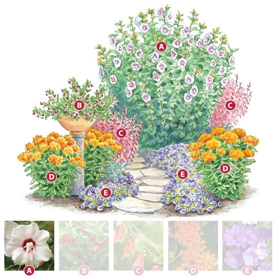 Hummingbird garden plan: A. Rose of Sharon, B. Batface plant, C. Penstemon, D.Butterfly weed, E. Petunia