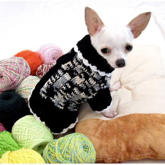 Chihuahuas white chihuahua and pet clothes on pinterest - Dog clothes for chihuahuas ...