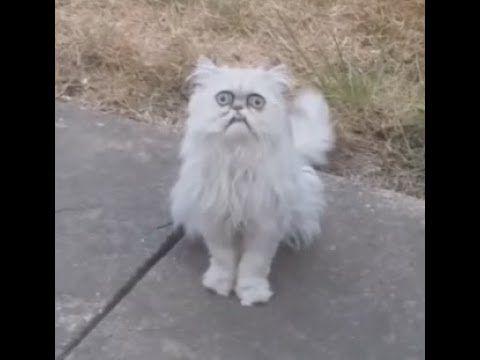 Weird Looking Cat 11