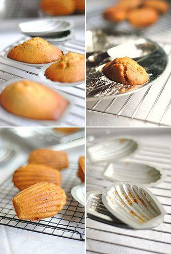 Browned Butter Hazelnut Praline Madeleines