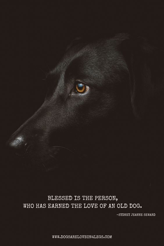 Blessed Is The Person Who Has Earned The Love Of An Old Dog Dog Quote Dogs Dog Quotes Old Dogs