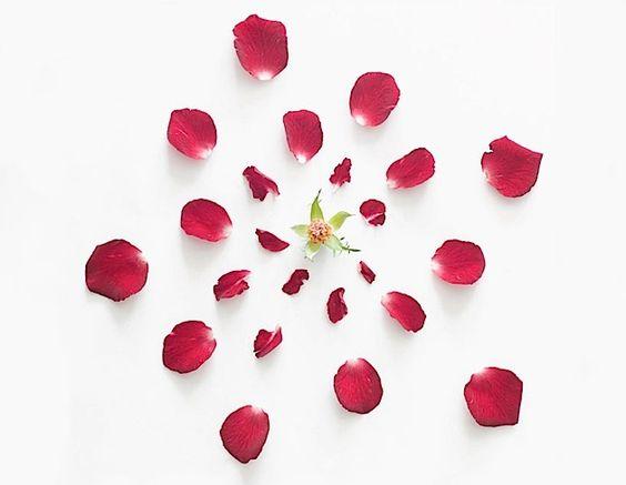 Feuerwerke aus Blumen   KlonBlog