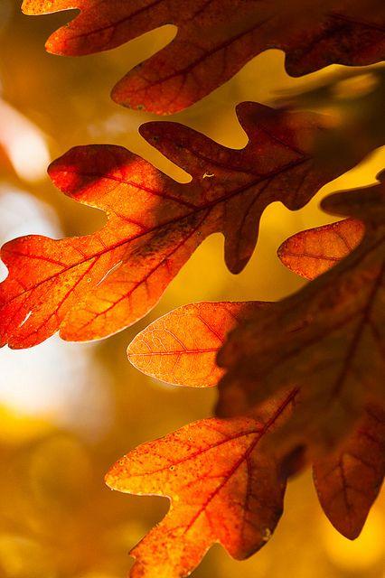 Orange | Arancio | Oranje | オレンジ | Colour | Texture | Style | Form | Oak Leaves by Jerry Mercier