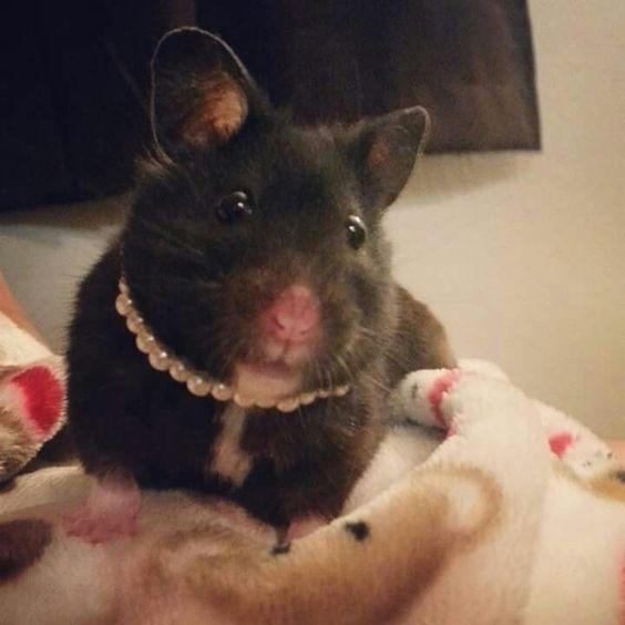 Hamster wearing pearls