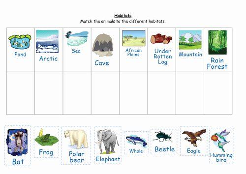 Animal Habitat Worksheets For Kindergarten Match The Animals To Their Habitats Animal Habitats Habitats Kindergarten Worksheets Animals and their habitats worksheets