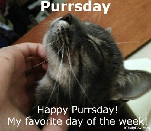 Happy Purrsday!