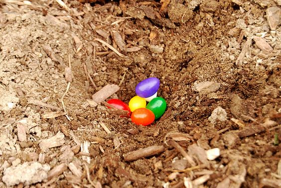 "Cute Easter Tradition  1. Buy some ""magic"" Jelly Beans  2. Plant them in your yard- this only works the night before Easter (wink wink)  3. The next morning go out and see what grew (large Lollipops!) follow link to pics"